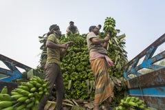 Labors are loading to pickup van on green bananas. Bangladeshi labors are stacking and loading to pickup van on green bananas for sending them to wholesale Royalty Free Stock Images