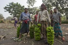 Labors are loading to pickup van on green bananas. Bangladeshi labors are stacking and loading to pickup van on green bananas for sending them to wholesale Stock Image