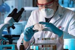 Labortechniker, der mit Petrischale für Analyse im Mikro arbeitet lizenzfreie stockbilder