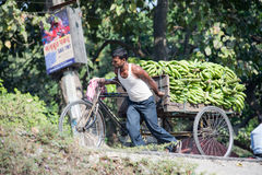 Labour in Siliguri. SILIGURI, INDIA – DECEMBER 5, 2016: local pulling a three-wheeled card laden with banana from the wholesale market Royalty Free Stock Photo