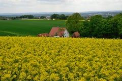 Labourage, blé et colza de la terre agricole contre le ciel bleu Photo libre de droits