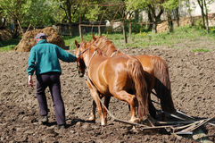 Labourage de la zone avec des chevaux Images libres de droits