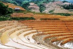 Labourage des champs avec des buffles Images stock