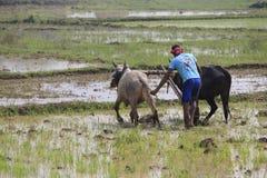 Labourage du champ avec l'aide d'un de soc de charue Images libres de droits