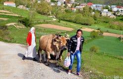 Labourant avec des boeuf, l'Albanie Photo libre de droits