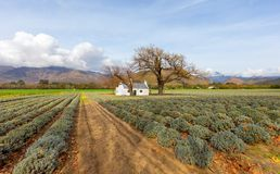 Labourers cottage in lavendar field royalty free stock photos