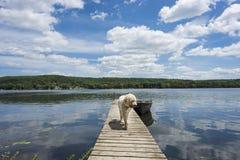 Perro en el muelle de la cabaña Fotografía de archivo libre de regalías