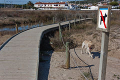 Labrador à la plage Photographie stock