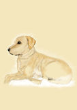 Labrador. Portrait/Illustration of a labrador Royalty Free Stock Images