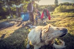 Labrador all'aperto Fotografia Stock Libera da Diritti