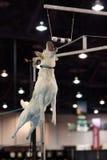 Labrador amarelo que salta para um amortecedor Imagem de Stock Royalty Free