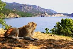 Labrador on the Baikal shore Stock Photo
