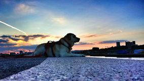 Labrador bei Clyde Sunset Stockfoto