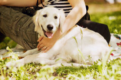 Labrador beige se trouve près de l'éleveur sur l'herbe verte Photographie stock libre de droits