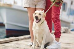 Labrador blanc sur une promenade avec leurs propriétaires Image libre de droits