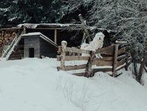 Labrador branco na neve foto de stock
