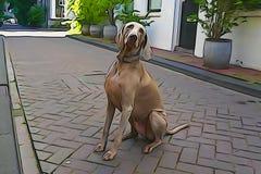 Labrador, das für ein Foto aufwirft vektor abbildung