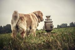 Labrador dehors Photo stock