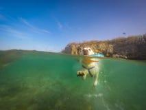 Labrador die met frisbeecuracao meningen zwemmen Stock Afbeeldingen