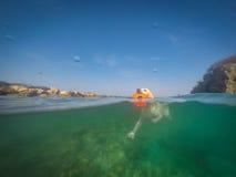 Labrador die met frisbeecuracao meningen zwemmen Royalty-vrije Stock Foto