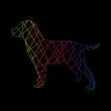 Labrador dog abstract isolated on a black backgrounds. Stock Photography