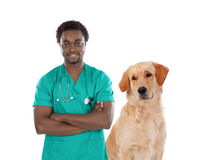 Labrador dog with african veterinarian Royalty Free Stock Photo
