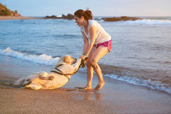 Labrador dog doesn`t want to swim. In ocean beach. Girl carry labrador dog in water Royalty Free Stock Image