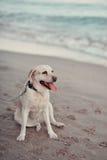 Labrador dog and sea Royalty Free Stock Photo