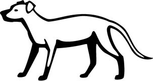 Labrador Dog Royalty Free Stock Photo