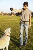 Labrador e instrutor com o brinquedo da mastigação do cão no parque foto de stock