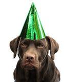 Labrador en sombrero del partido imagenes de archivo
