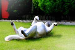 Labrador enjoying sunshine Stock Images