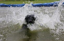 Labrador está haciendo a una fiesta en la piscina imagen de archivo libre de regalías