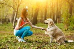 Labrador gibt dem Mädchen Tatze Stockbild