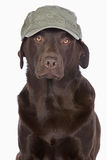 Labrador in Green Army Style Baseball Cap Stock Photo