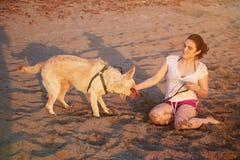 Labrador humide secouant sur la plage Images stock