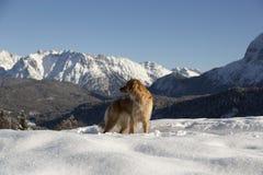 Labrador i berget Arkivfoton