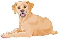 Labrador. Illustration of a cute Labrador Stock Photos