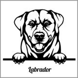 Labrador - jetant un coup d'oeil des chiens - - tête de visage de race d'isolement sur le blanc illustration libre de droits