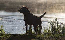 Labrador at the lake Royalty Free Stock Photos