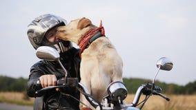 Labrador likt een kerel` s gezicht in een motorfietshelm stock videobeelden