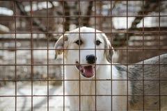 Labrador mezclado abandonado en su caja Fotos de archivo libres de regalías