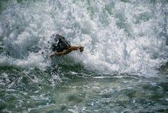 Labrador noir comme amusement, recherchant le bâton des vagues méditerranéennes image stock