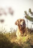 Labrador Outdoors Stock Image