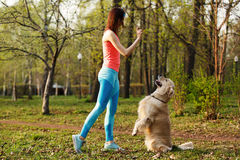 Labrador performs commands of girl. In park Stock Images