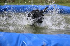 Labrador in the pool with a ball. Funny black labrador is having fun in the pool with a ball stock photography
