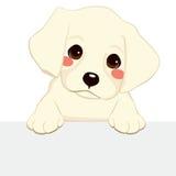 Labrador Puppy Banner. White labrador golden retriever puppy holding blank banner Stock Image