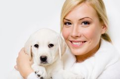 Labrador puppy sitting on the hands Stock Photo