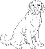 Labrador retriever. Vector - Labrador retriever contour isolated on background Stock Photos