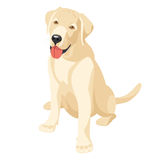 Labrador (retriever). Labradors puppy - affectionate and devoted  friend Royalty Free Stock Images